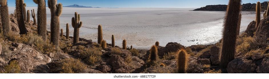 Incahuasi island  (Cactus Island) located on Salar de Uyuni,  the world's largest salt flat area, Altiplano, Bolivia, South America