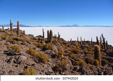 Incahuasi island in the salar de uyuni with cactus