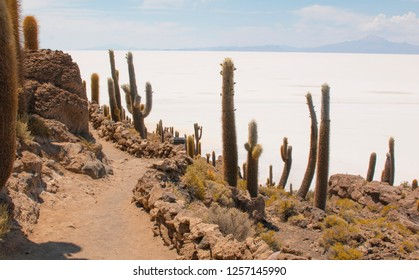 Incahuasi island, Uyuni Saline (Salar de Uyuni), Aitiplano, Bolivia. Uyuni.