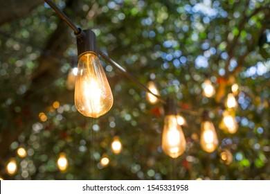 incandescent light bulb hanging In a garden.