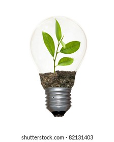 Incandescent light bulb with a sapling as the filament