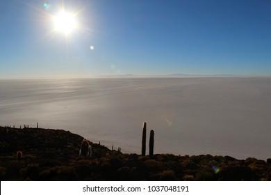 Incauhuasi Island in Bolivian Salt Flats (Salar de Uyuni) - Bolivian Highlands (Altiplano Boliviano)