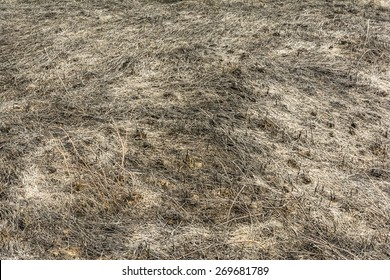 Incendies after burning grass