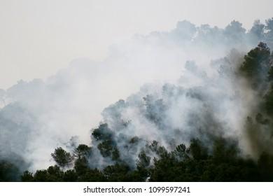 Incendio forestal en monte
