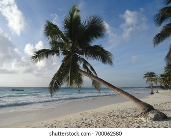 An inclined palm tree on the beach