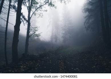 Incredible Cloud Forest. Autumn forest Impression with dense fog