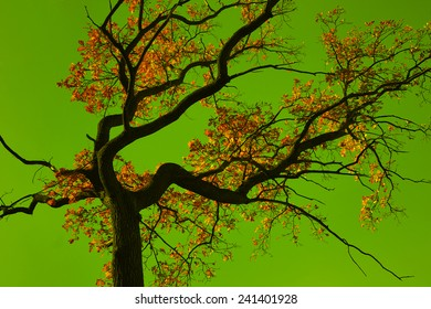 Incredible colors of autumn. Autumn oak tree on a background of the green colors of the sky.