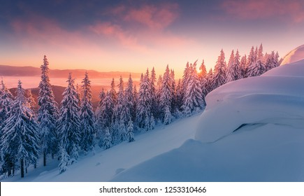 Incredible Winter Landscape With colorful Sky in Alps during sunset. Wonderful Frosty Trees under bright sunlight in sunrise. Amazing wintry scenery in Carpathian. Awesome natural Background. Ukraine