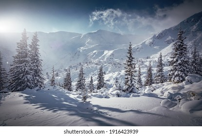Incredible winter landscape with snowcapped pine trees under bright sunny light in frosty morning. Amazing nature scenery in winter mountain valley. Awesome natural Background. Soft light effect
