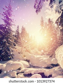 Incredible Winter Scene. Snowcowered Pine trees under Sunlight. Wondeerful Picturesque scene. Impressive Winter Landscape. Spectacular sunset over the fairy-tale woodland. Instagram Filter