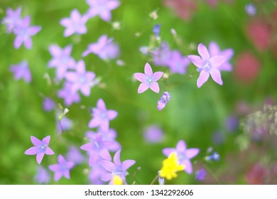 Incredibly beautiful purple bell flowers in the forest with blurry green background. Natural beauty photography, colorful floral meadow field with wildflowers close up