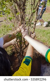 Indaiatuba, December 14, 2016, hands of unidentified children planting a tree at dusk in an unidentified park.