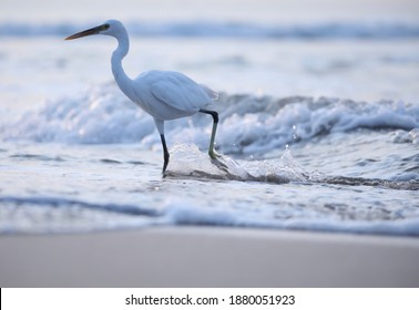 India, 11 November, 2020 : An egret stand in the water.