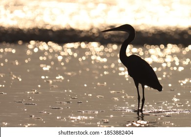 India, 5 November, 2020 : An egret standing on the water at sunset time, sunset background.