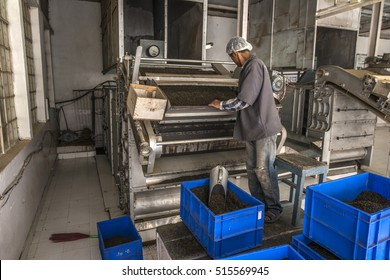 INDIA, DARJEELING, 27-10-2016: Worker filling an oven with fermented leaves for firing for 25 minutes with 95 degrees Celsius to stop oxidation.