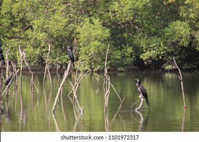 India, GOA - The birds sanctuary of Salim Ali, birds are standing on sticks sticking out of the water