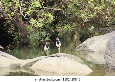 India, GOA - December 25, 2014: The bird sanctuary of Salim Ali, It is located on the territory of mangrove swamps, not ordinary stones on which birds sit