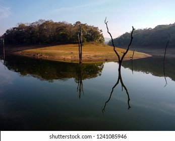 India, Kerala, Periyar, 02/10/2009:trunks of old trees submerged along the banks of the lake of the Peryar nature reserve photographed in the light of dawn