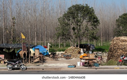 India, Mohali - March 9, 2018: roadside petty trade and roadside teahouse (routier) with bamboo firewood, sugar cane and a grove in the background