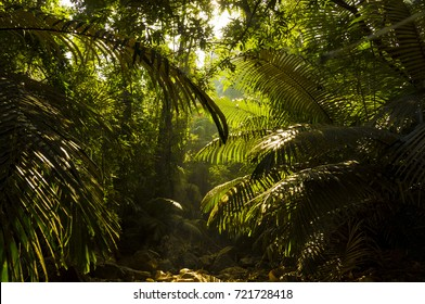 India mountain jungle
