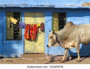 India Rajasthan Jodhpur. Blue city street life photography.