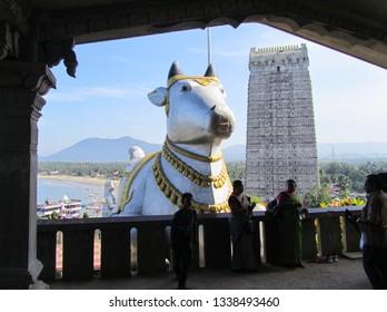 India, the state of Karnataka, the city of Murdeshwar. November 16, 2014. Statue of the sacred cow and Gopuram. People in national dress