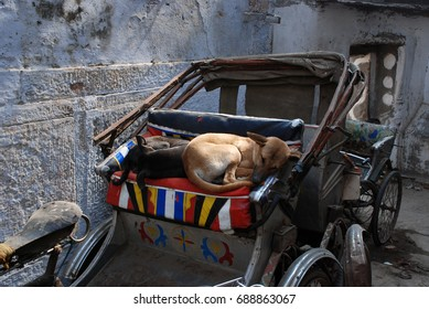 India, Varanasi. Street dog is sleeping in cycle rickshaw.