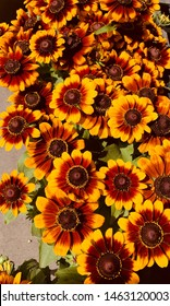 Indian Blanket Flower Blooms Daisy