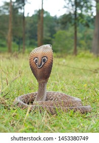 indian cobra also known as the spectacled cobra