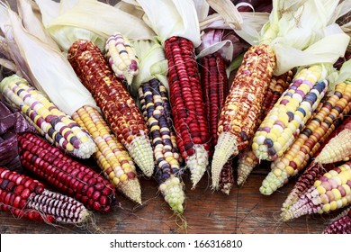 Indian colored corn