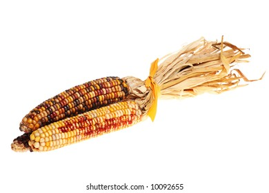 indian corn, ideal for Thanksgiving or Halloween decorations