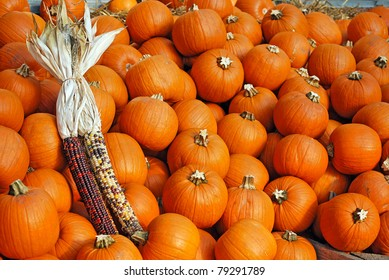 indian corn on a pile of pumpkins