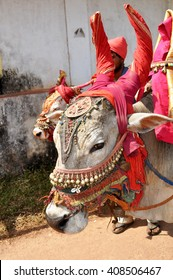 Indian cow decorated with colorful cloth and jewelry.
