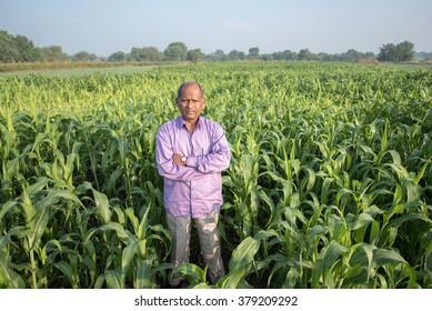 Indian educated farmer in his sorghum crop field, rural village Salunkwadi, Ambajogai, Beed, Maharashtra, India, South East Asia.