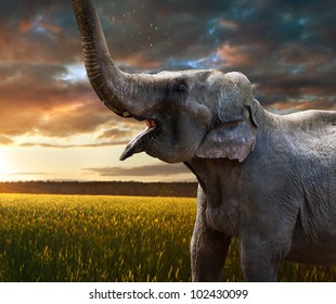 Indian Elephant at sunset in nature