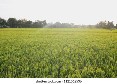 indian farm land with sun kissed climate