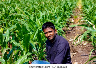 Indian farmer in Corn field