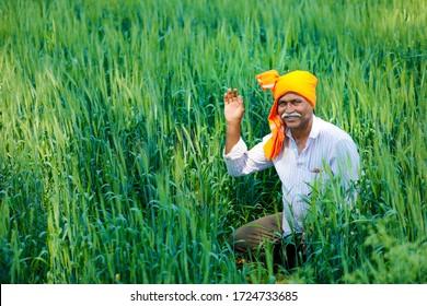 Indian farmer at golden wheat field