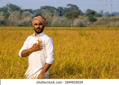 Indian farmer with paddy barley in his pocket connecting earning from yield