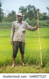 Indian Farmer in Paddy Field. A paddy field is a flooded parcel of arable land used for growing rice.