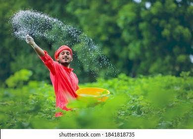 Indian farmer spreading fertilizer in the green cotton field