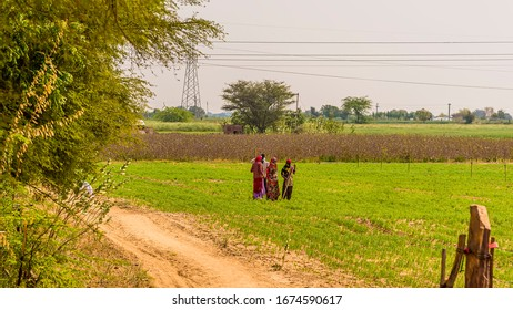 Indian farmers cultivate the land in Rajasthan, India