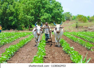 Indian farming technique
