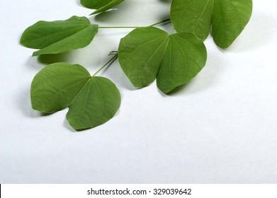 Indian Festival Dussehra, showing golden leaf on grey background. Greeting card.
