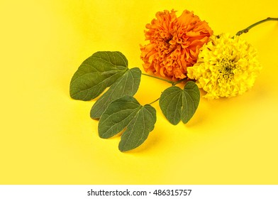 Indian Festival Dussehra, showing golden leaf (Piliostigma racemosum) and marigold flowers on yellow background. Piliostigma racemosum. Greeting card.