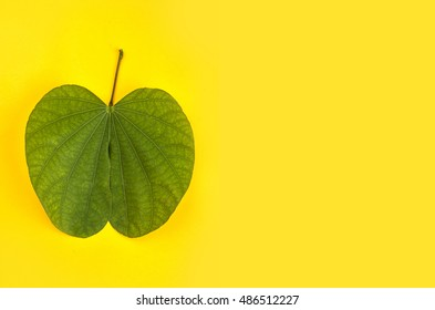 Indian Festival Dussehra, showing golden leaf (Piliostigma racemosum) on yellow background. Piliostigma racemosum. Greeting card.