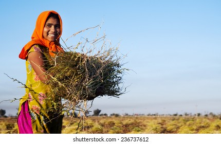 Indian girl working on the farm. near Jaipur, India.