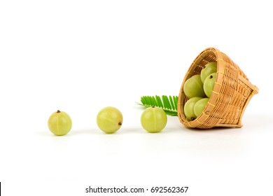 Indian Gooseberry, fruits medicinal properties.