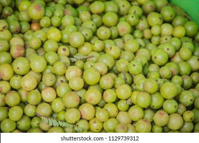 Indian gooseberry (Phyllanthus emblica), also known as emblic, emblic myrobalan, myrobalan, Indian gooseberry, Malacca tree, or amla fruit. Emblic fruits for sale in the fruit market, Thailand.