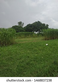 Indian green field near Kanpur
